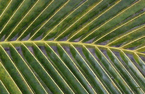 Tropical Palm Shade (II)
